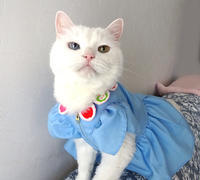 姫帝の新作服! - 家なき猫