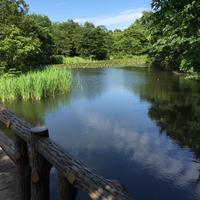 今日は、新月。石神井公園に遊びにいらっしゃいませんか?by Meg - 毎日がセンス・オブ・ワンダー