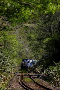 新緑のトンネルを往く。 - My favorite Photo book