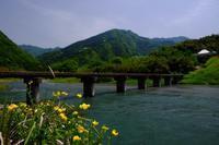 初夏の穴吹川 - ブナの写真日記