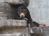 2018年4月天王寺動物園その4 - ハープの徒然草