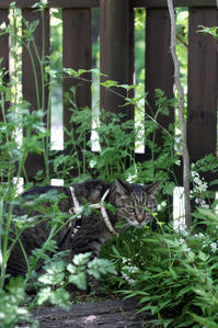 おいちーお顔 - 小さな森のキキとサラ