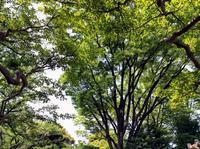 今日は暑かった。東京は5月なのに気温29度ですよ。向島百花園狭いですが、ちゃんと木陰 - 設計事務所 arkilab