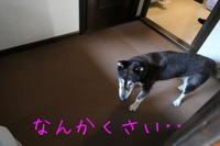 災難とお出迎えとやっとレモンケーキ - HAMAsumi-Life
