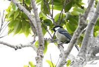 奄美の普通種さん達亜種初見♪初撮り♪ - ケンケン&ミントの鳥撮りLifeⅡ