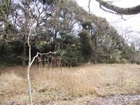 里山のオオクワを求めて下見散策  2年前に見た台場クヌギは…    part2 - Kuwashinブログ