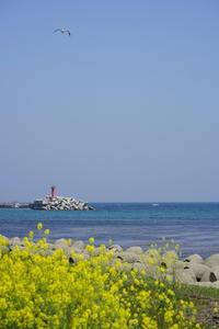 凪の海 - jam×jam