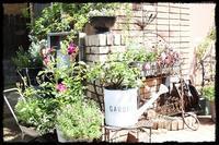 Rose Garden、、、 - Salt&Orange時々Pepper
