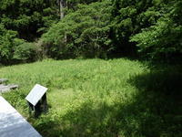 夏日2日目。また草刈りです / オオヨシキリ - 千葉県いすみ環境と文化のさとセンター