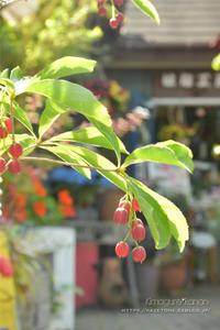小さな庭の大切なタカラモノ - きまぐれ*風音・・kanon・・