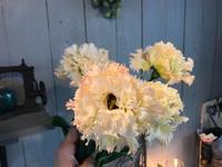 切花の入荷情報です(^-^) - ブレスガーデン Breath Garden 大阪・泉南のお花屋さんです。バルーンもはじめました。