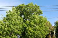 季節は夏⁉ - 大阪北陸急配オフィシャルブログ