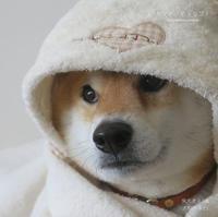 犬のブロマイド撮影 - yamatoのひとりごと