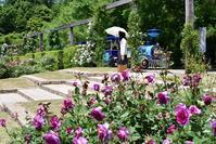 花フェスタ記念公園のバラ その2 - 尾張名所図会を巡る