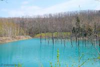 新緑の青い池~5月の美瑛 - My favorite ~Diary 3~