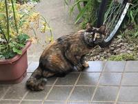 ピカソの絵みたいな顔のサビ猫ちゃん - Lucky★Dip666-Ⅲ