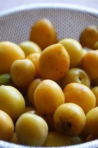 国頭村は奥の、自然栽培の完熟梅。 - 治華な那覇暮らし