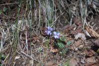 守屋山で出会ったお花たち2018年05月01日(火) - 光の贈りもの
