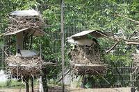 クロツラヘラサギが孵化しました。 - 動物園放浪記