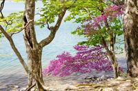 トウゴクミツバツツジ見頃 - いぐさん流 山と花の写真(富士山)