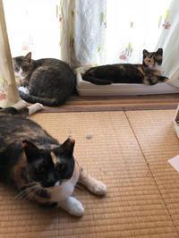 両使い - 愛犬家の猫日記