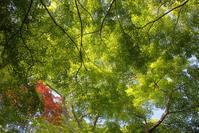 新緑の近江 八幡山城跡 - 京都ときどき沖縄ところにより気まぐれ