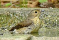 鳥たちが溢れて(写真が22枚!!) - Naturfreude