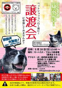 次の日曜日(5/20)はマーベラスさん協賛の譲渡会です♪ - もももの部屋(家族を待っている保護犬たちと我家の愛犬のブログです)