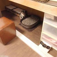 ほらー!!! - 賃貸ネコ暮らし|賃貸住宅でネコを室内飼いする工夫