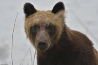 【緊急報告】ウトナイ湖でヒグマと遭遇!! - やぁやぁ。