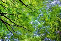 第849回 新緑イリュージョン - 湘南群青 -The sunset  blue -