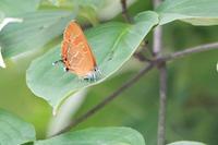 蝶とアメンボ - 何でも写真館