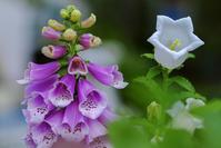flower 038 - LUZ e SOMBRA