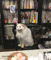 くれそうな人を見る - ぶつぶつ独り言2(うちの猫ら2018)