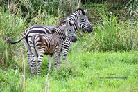 二度目の台北も雨 - 動物園でお散歩