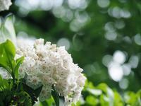 5月の赤塚植物園 2 - 光の音色を聞きながら Ⅲ