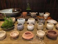 小さな植木鉢展~3 - アオモジノキモチ