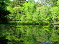 万緑の雲場池 * リフレクションの美しさ - ぴきょログ~軽井沢でぐーたら生活~