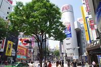 5月18日(金)の109前交差点 - でじたる渋谷NEWS