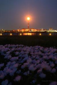 ツキミソウ - 僕と埠頭と工場で