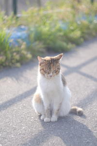 Happy Caturday ♡ - aya's photo