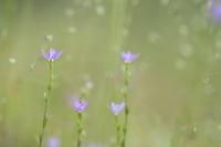 初夏の色 - ecocoro日和