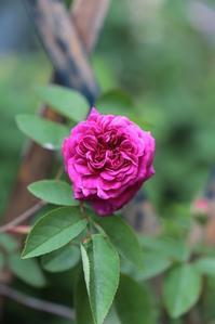 紫玉 18-01 - まとまりの無い庭 excite版