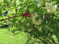 メスグロヒョウモン初見 - 秩父の蝶