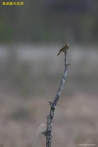 撮った鳥全部シリーズ第二段 - 奥武蔵の自然