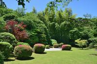 ◆花情報◆【サツキ】が咲いています! - 名鉄犬山ホテル情報
