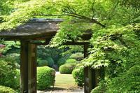 日本庭園『有楽苑』の 新緑◆緑が輝いています! - 名鉄犬山ホテル情報
