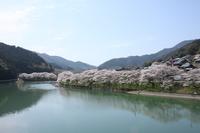 桜舞う頃② - 花の咲み、花のうた、きらめく地上 ―― photo&poem gallery kanon