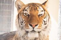 関西遠征#1 Day1 京都市動物園編。 - レサパン&カワウソ日記。