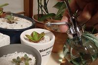 多肉植物を艦長室で育てる - スポック艦長のPhoto Diary